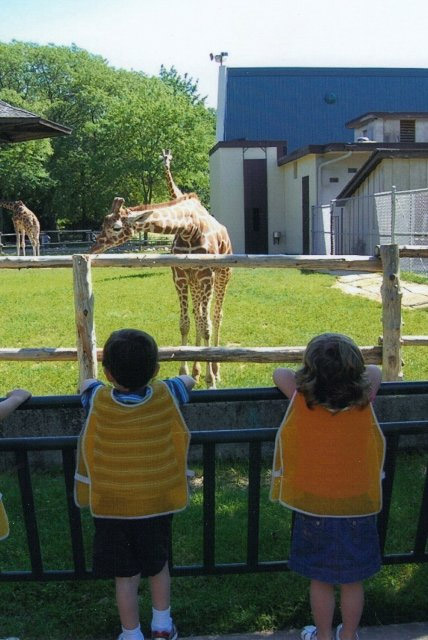 kids looking at giraffes