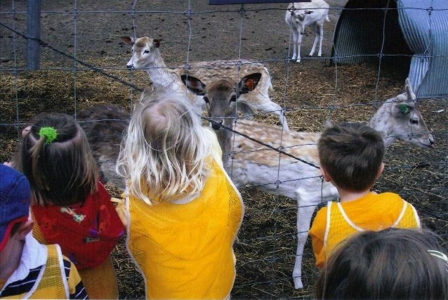 kids looking at deer